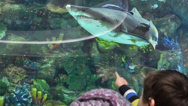 """Океан Плаза"", специи и уха из акулы"