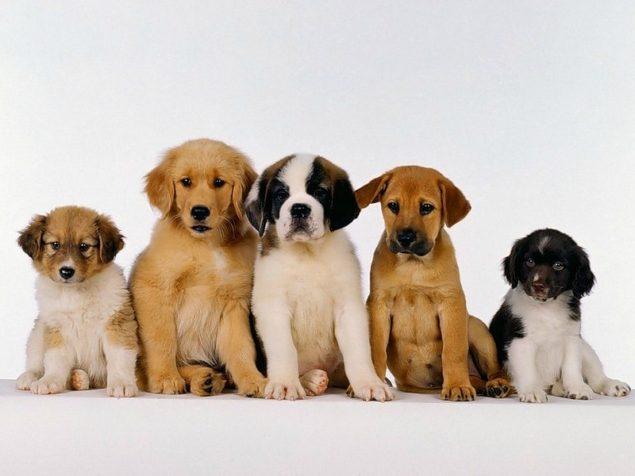 Як взяти собаку з притулку в Англії і як в Україні