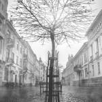 «Сходи» Олексія Попова