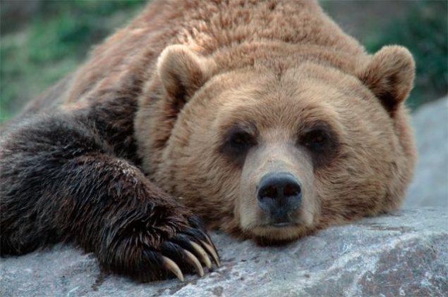 Диссидент Александр Бывшев: «Русский Медведь — сенатору Маккейну»