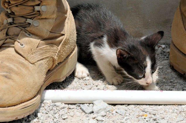 kitten_