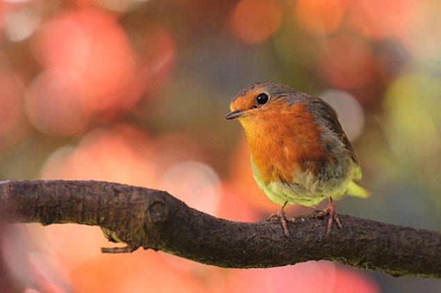 Пісня перелітного птаха: Рікардо