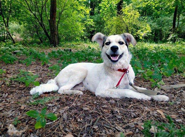 10 аргументів, щоб взяти дорослого собаку із притулку