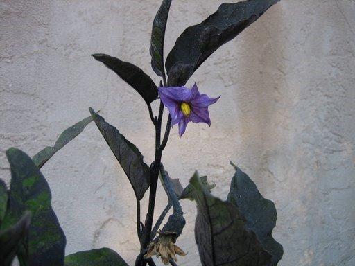 Ліричні мініатюри типу «яка весна, така й лірика»