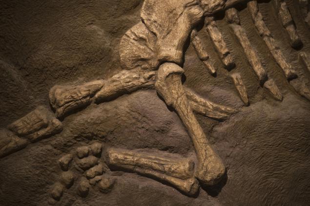 Динозаври зникли – і з`явились – внаслідок удару!