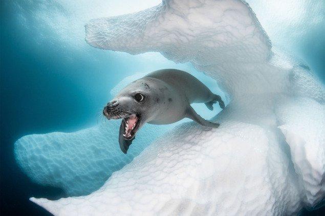 """Неймовірні фото з """"Конкурсу Арт Дослідженнь Глибин Океанічного Життя"""" 2019"""