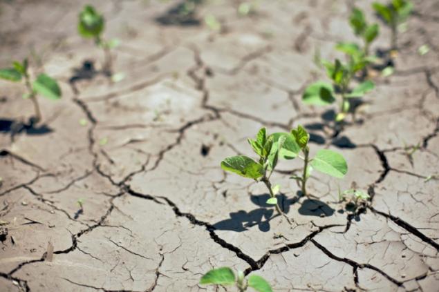 Оккупанты планируют поливать посевы в Крыму сточными водами