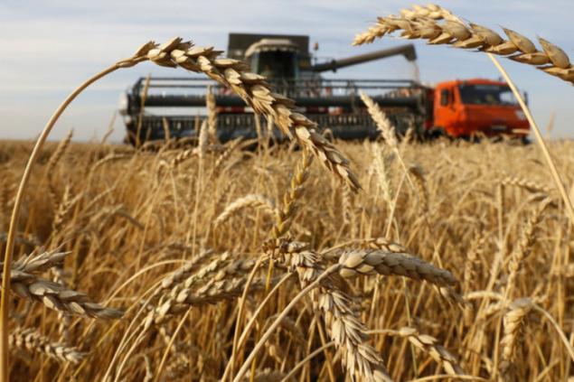 Мы ожидаем около 70 млн тонн – Нацбанк об урожае зерновых