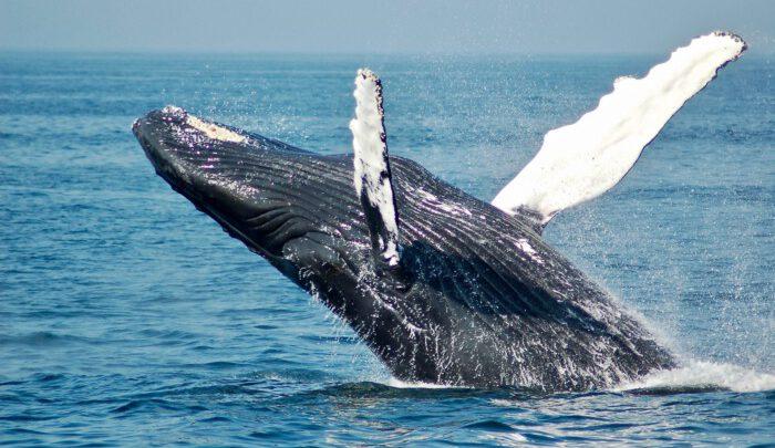 """Тенденція щодо """"китів"""" вказує на запуск біткоіну невдовзі ще вище"""