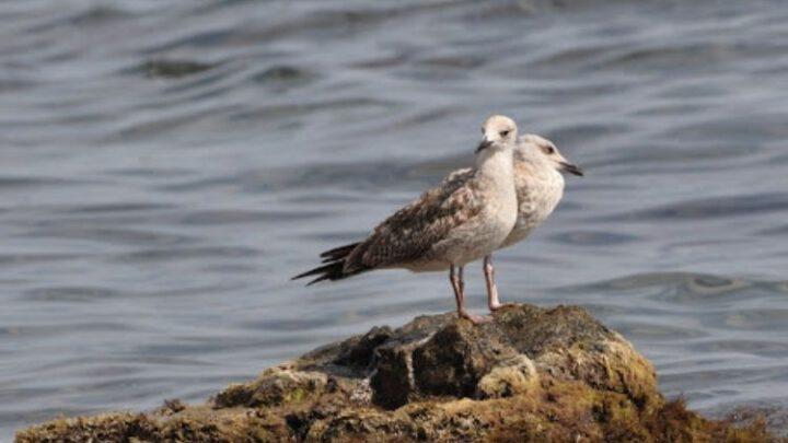 Международные организации рассмотрят проблемы экологии прилегающих к Крыму морских вод