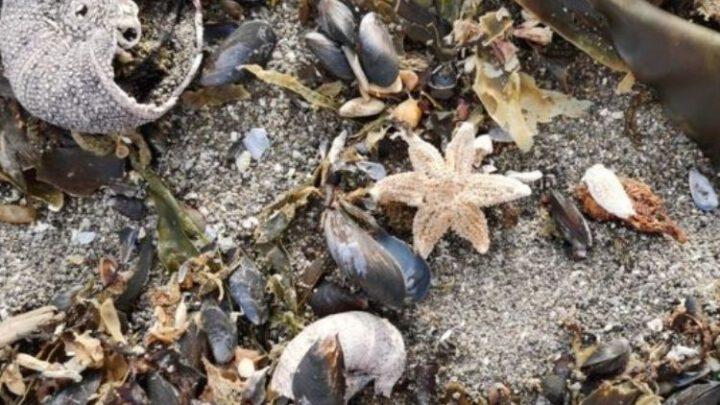 Еще два места массовой гибели морских животных найдены на Камчатке