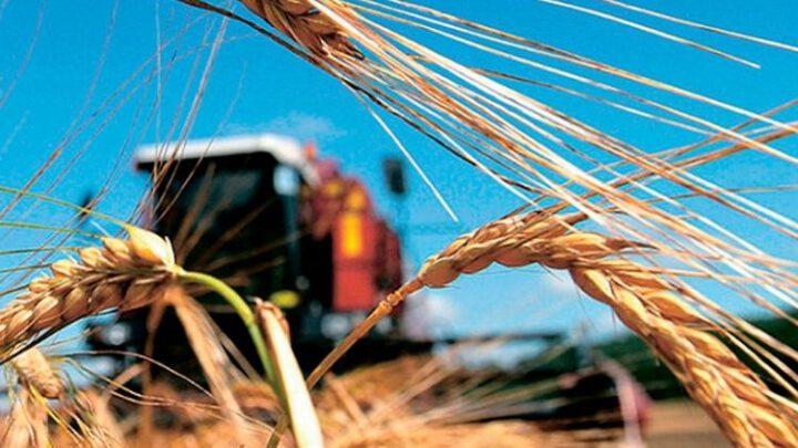 Египет заинтересован покупать больше украинского зерна