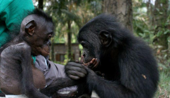 Афроабетка (зак.) для дітлахів [3]