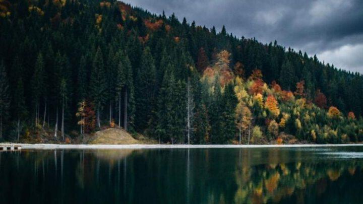 В Украине появится фонд лесопромышленных стартапов