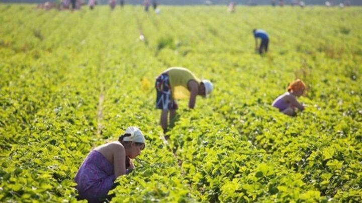 Обедневшим петербуржцам начали предлагать сельскую работу в Финляндии