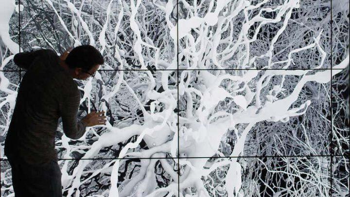 Обзор In Silico: амбициозный проект по воссозданию человеческого мозга