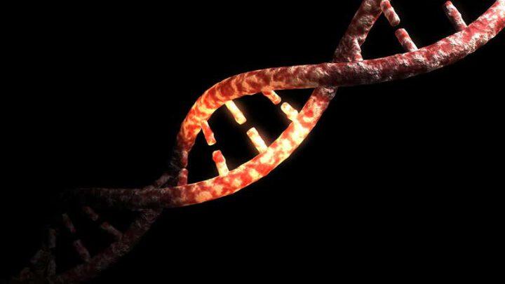 Только 1,5-7% современного генома человека принадлежат исключительно нам
