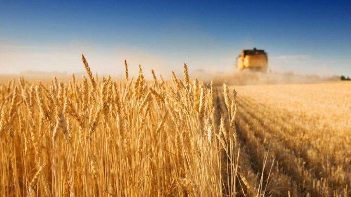 Стартував продаж сільськогосподарської землі в Україні