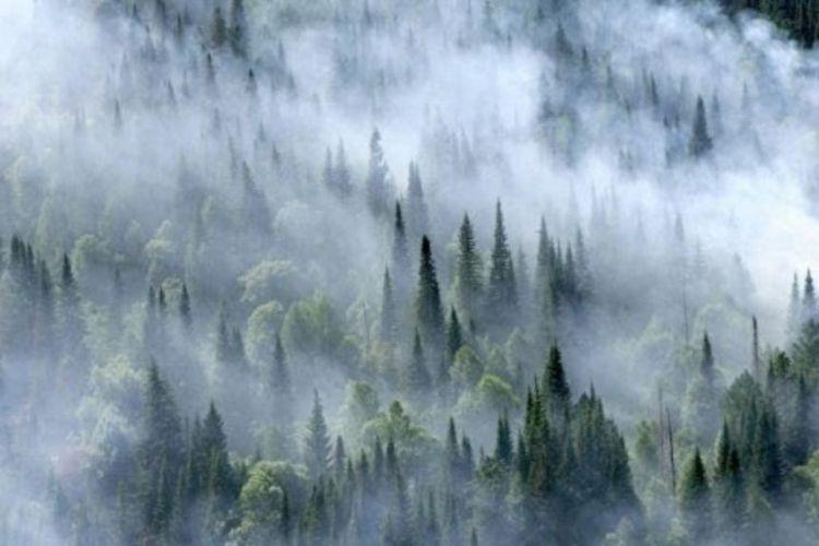 Лесные пожары в России стали источником рекордного загрязнения атмосферы