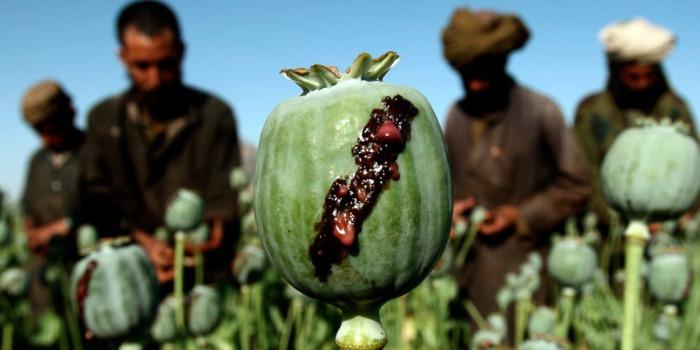 США не удалось остановить торговлю наркотиками в Афганистане, но Талибан нашел лучший способ заработать