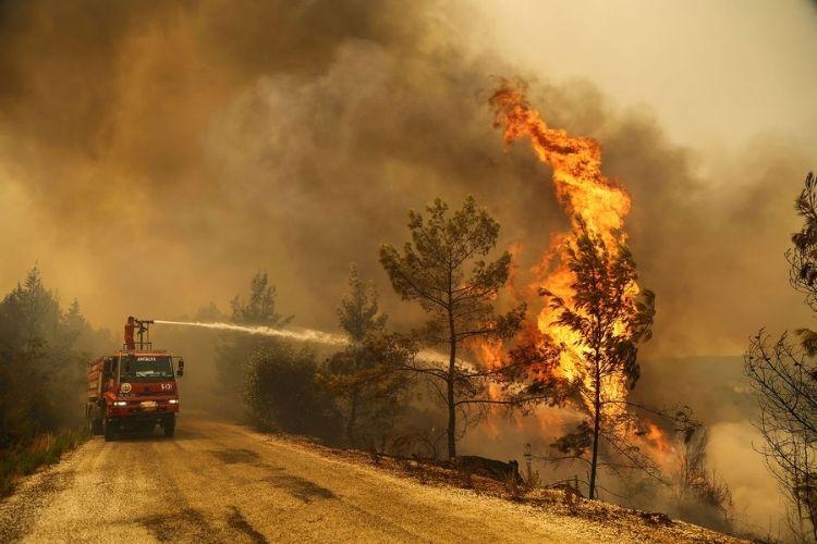 В Турции задержали российских туристов по подозрению в поджогах лесов