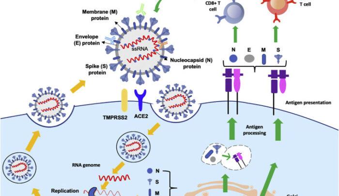 Вакцины против Covid-19. Научный подход. Эксклюзив