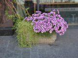 Архитектурные вазоны из бетона — долговечность и прочность садовых композиций